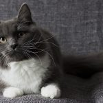 Tina 6,5 months klein