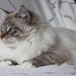 Ragnar 7,5 maand oud 2 klein
